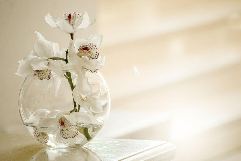 Caring the Sick Orchids