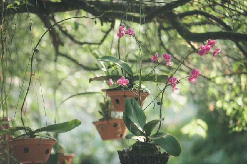 pottind the orchid