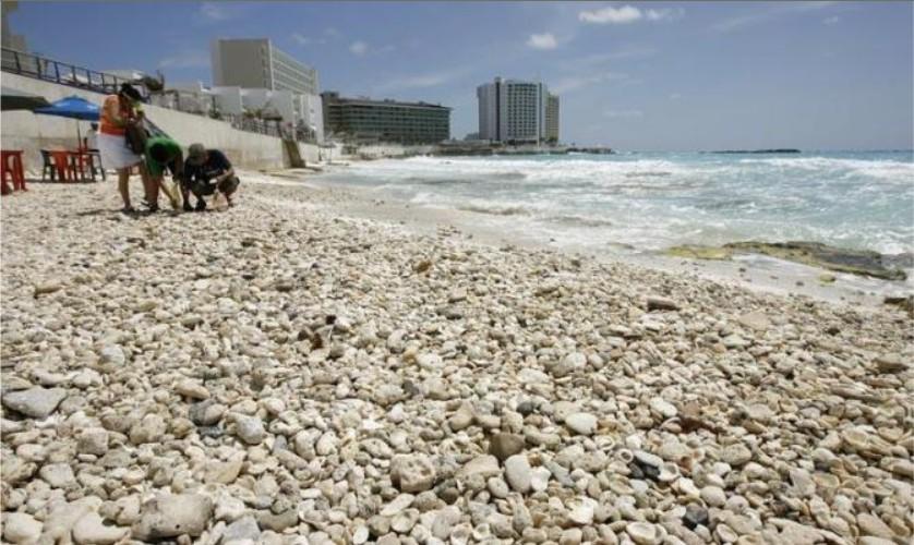 Cancun Ida Km 9 sipse 090530