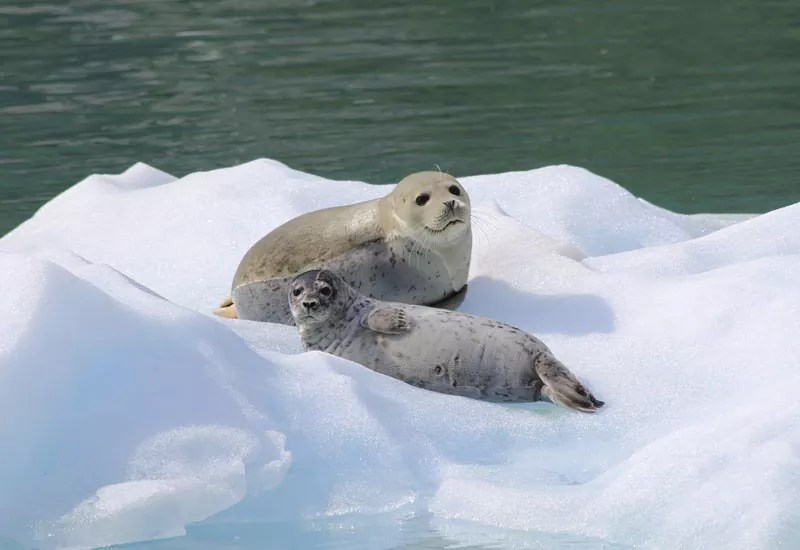 Alaska Photography Cruises MV Discoverys Tour Photo Gallery