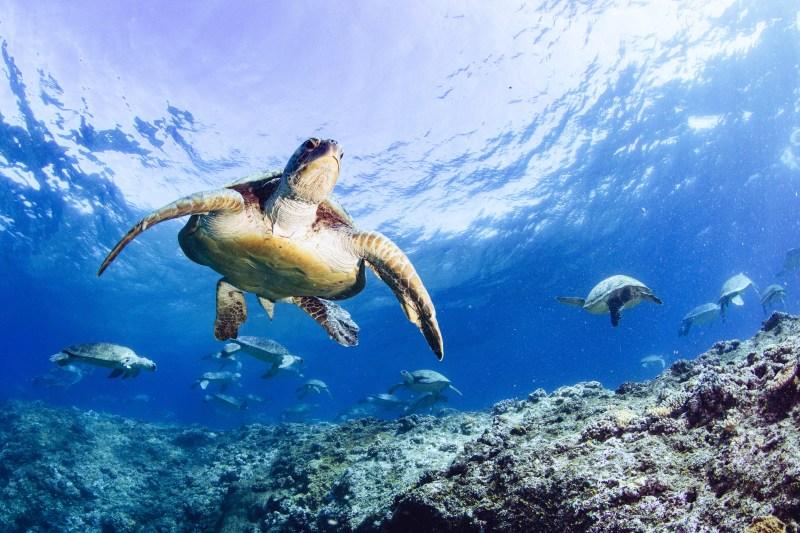 A scene from 'Turtle Odyssey' - DOP Jon Shaw