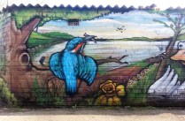 Kingfisher detail
