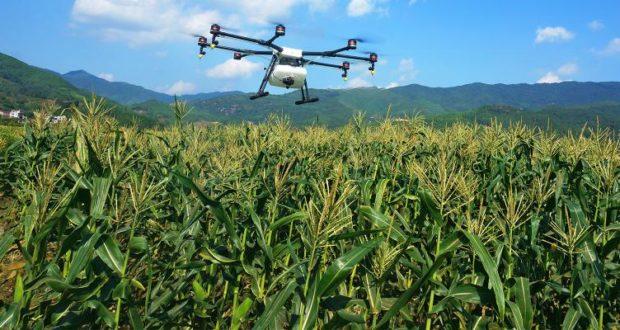 Dron sobrevolando un cultivo