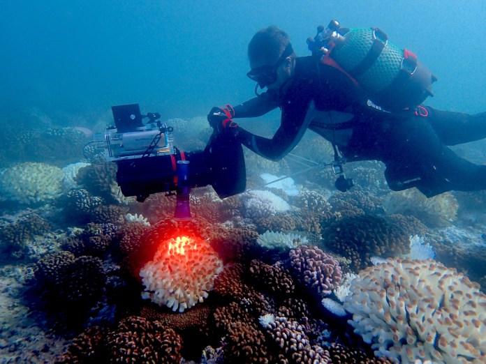allen-coral-atlas