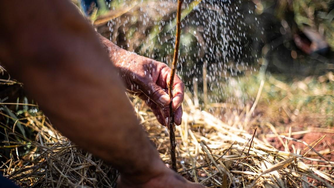 Meio Ambiente de Cotia lembra o 'Dia de Proteção às Florestas' com plantio