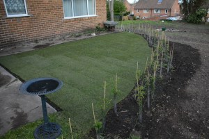 New Turf And Native Hedging Around Bungalow