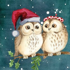 Owls in Christmas hats