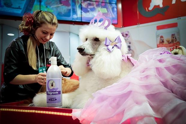 Pet Experience terá atrações tanto para donos quanto para cães e gatos