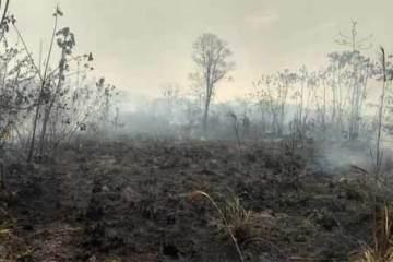 foto de queimada