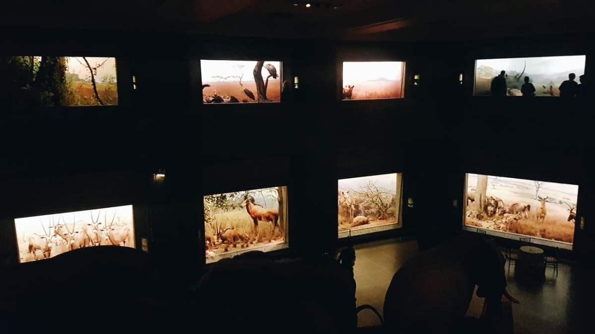 Lugares para visitar em Nova York - Museu Americano de História Natural