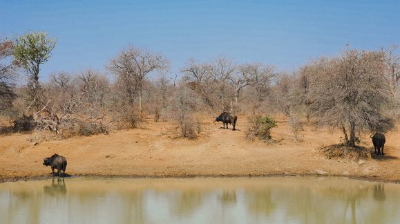 safari no kruger