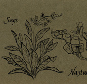 Herbs Bookmark