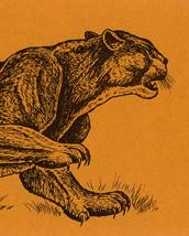 Mountain Lion Bookmark