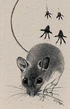 White-footed Mouse Bookmark