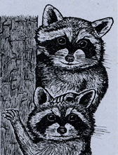 Raccoons Bookmark