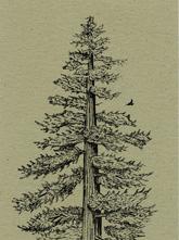 Redwood Bookmark
