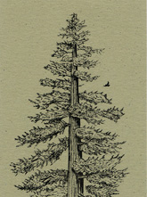 Redwood Bookmark