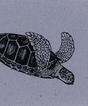 Sea Turtles Bookmark