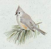 Tufted Titmouse Stationery