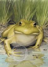 Bullfrog Notecard