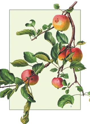 Apple Branch Notecard