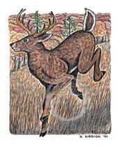 White-tailed Deer Lokta Card