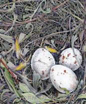 Meadowlark Nest Lokta Card