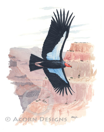 California Condor Notecard