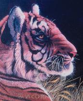Tiger Lokta Card