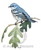 Cerulean Warbler Lokta Card