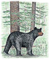 Black Bear Lokta Card