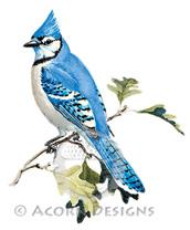 Blue Jay Lokta Card