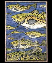 Atlantic Cod Lokta Card