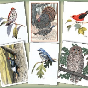 Woodland Birds Assortment