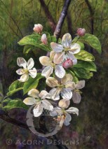 Crabapple Notecard
