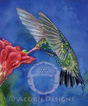 Broad-billed Hummingbird Lokta Card