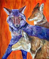 Coyotes Lokta Card