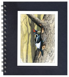 Ivory-billed Woodpecker Notecard