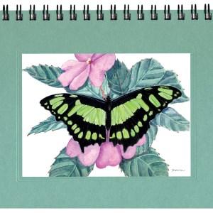 Malachite Butterfly Notecard