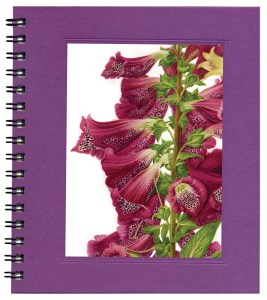 Foxgloves Bargain Notecard