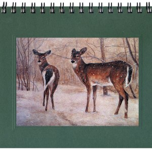 White-tailed Deer Notecard