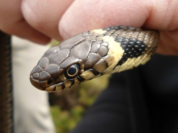 Reptile course, ecology courses, ecology training