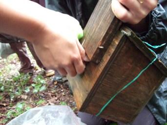 Dormouse box, ecology courses