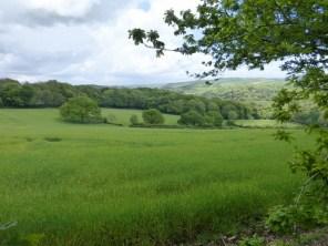 Lanhydrock meadow