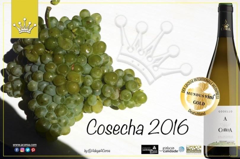 Godello, A Coroa, Comprar, Godello, Online,