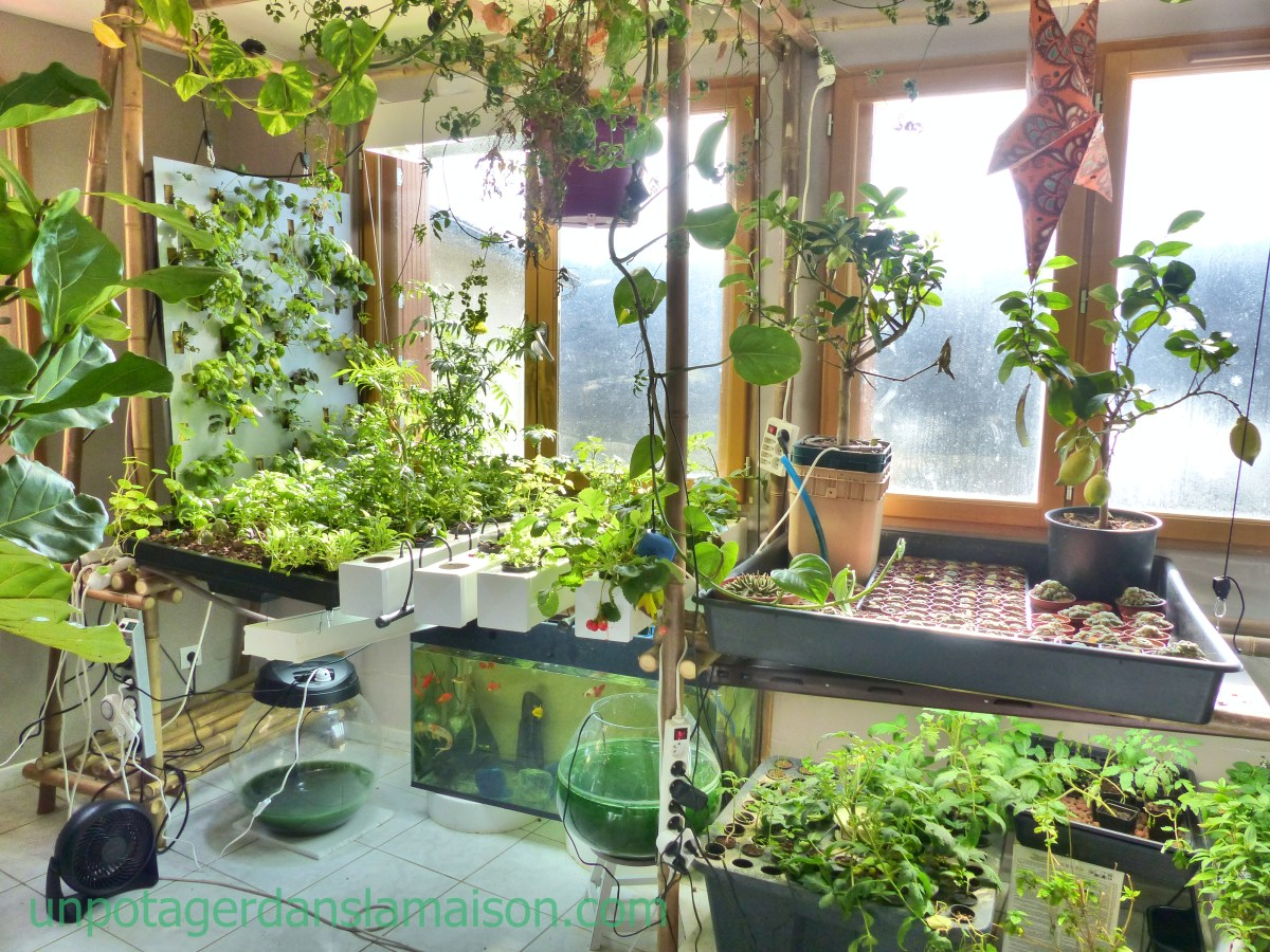 indoor vegetable garden ideas Indoor Vegetable Garden: Let's invent a universe together