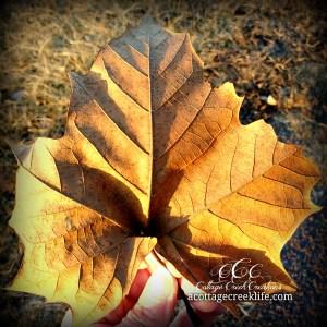 Leaf cCc