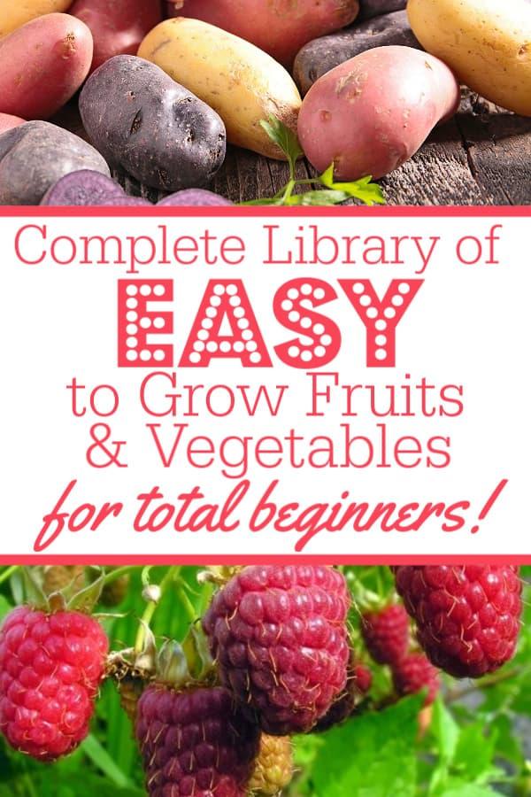 easy to grow veggies