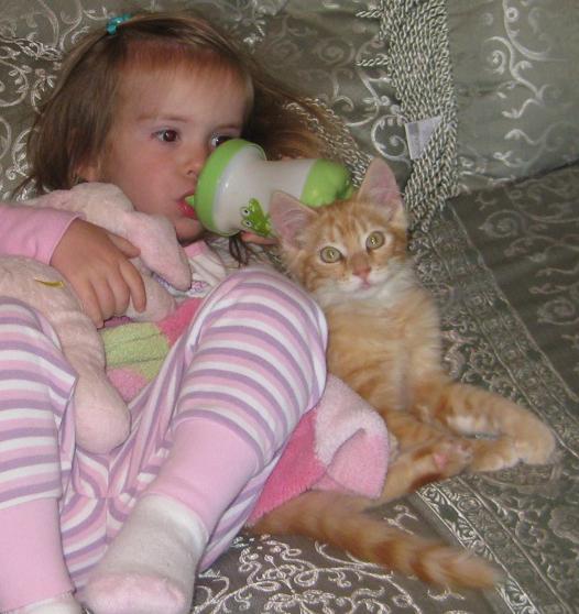 Tom Cat Named Ginger