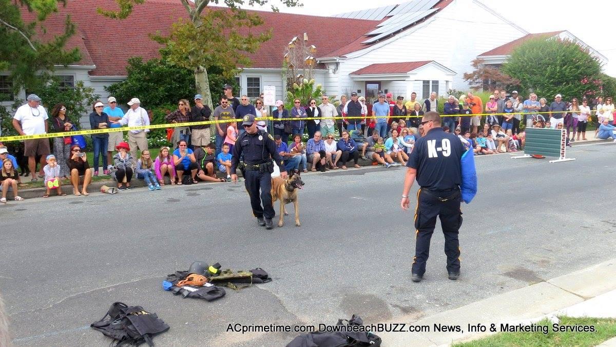K-9 Demonstration At Margate Dog Show